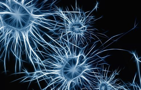 Influencing Customer Behaviour by understanding the human brain